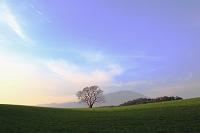 岩手県 夕日に染まる小岩井農場の一本木