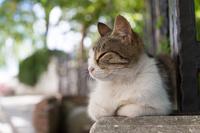 イスタンブール ゆったりとしたキジ白柄の猫