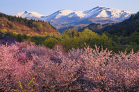 山形県 大井沢河川敷の桜と月山朝景