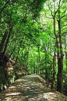 奈良県  春日山原始林