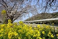 川西 菜の花と猪名川にかかる阪神高速道路