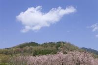 京都府 福知山市 京都府緑化センター