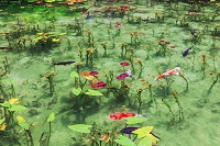 岐阜県 モネの池