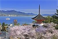 宮島の厳島神社の大鳥居と多宝塔と桜 広島県