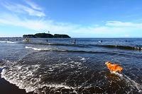 神奈川県 湘南 鵠沼 江の島