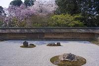 京都 龍安寺 方丈庭園
