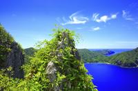東京都 母島 ムニンセンニンソウに覆われた石灰岩と東港と北港
