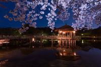 奈良市 奈良公園 浮見堂