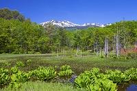 長野県 乗鞍高原 市ノ瀬園地のどじょう池