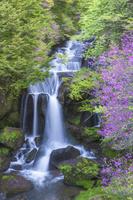 栃木県 竜頭ノ滝とミツバツツジ