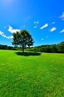 新緑の木々と芝生の丘
