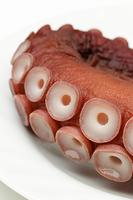 茹で蛸の吸盤(ミズタコ)