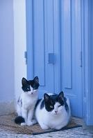 扉の前で佇む猫の親子