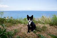 沖縄県 海辺の猫
