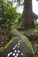 島根県 出雲市 須佐神社