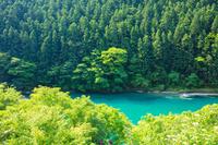 徳島県 新緑の祖谷川