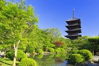 京都府 東寺 瓢箪池と五重塔
