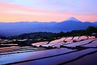 山梨県 朝焼けの富士山と棚田