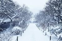 神奈川県 鎌倉の雪景色 寺