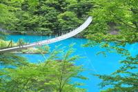 静岡県 新緑の寸又峡の夢の吊り橋