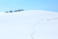 北海道 雪原の丘に続くキタキツネ足跡