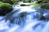 渓流の落水と苔むす岩