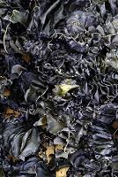 和歌山県海藻の自然乾燥