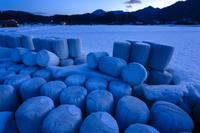 広島県 夜明けの雪原に並ぶ稲わらロール