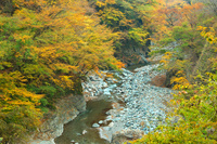 埼玉県 晩秋の中津峡