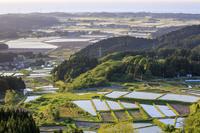 秋田県 西日を浴びる水田