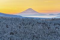 長野県 朝の樹氷と富士山