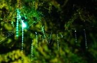 ニュージーランド ワイトモ洞窟