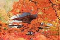 長野県 大町市 霊松寺