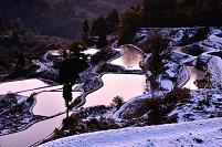 新潟県 十日町市 朝日が差しこむ新雪に包まれ紅葉した蒲生の棚田
