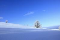 北海道 樹氷の木