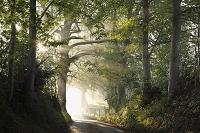 ドイツ 早朝の森の中