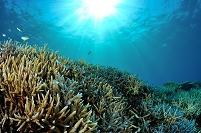 沖縄県 竹富町 西表島のサンゴ礁
