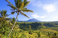 インドネシア バリ島 ジャティルウィ