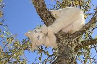 木の枝で遊ぶ猫