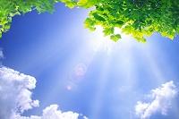 青空とグリーンの葉と木漏れ日