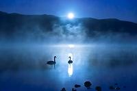 北海道 月光の屈斜路湖白鳥