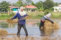 タイ アユタヤ 農作業