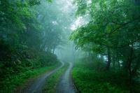 広島県 比婆山 霧に続く轍道