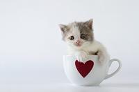 カップの中の子猫