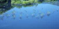 水中木のリズム