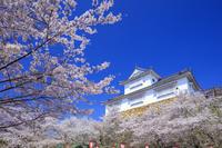 岡山県 サクラ咲く津山城備中櫓 鶴山公園