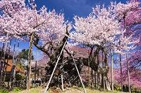 山梨県 山高神代桜