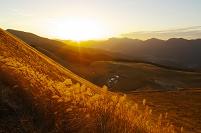 奈良県 曽爾高原 黄金色に輝くススキ
