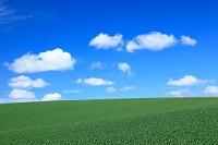 北海道 麦畑と流れる雲