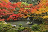 京都府 蓮華寺 書院から見る庭園の紅葉